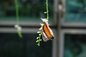 Butterfly Garden, Changi Airport