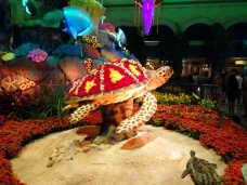 Turtle in the Conservatory