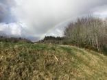 Rainbow over the brush