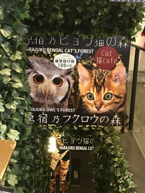 Owls or cats to make you relax during dinner ?