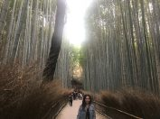 Bamboo Garden - Arashiyama